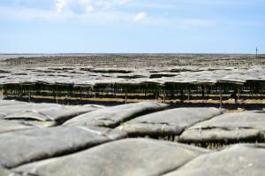 Terroir Charente maritime – Parc à Huitres